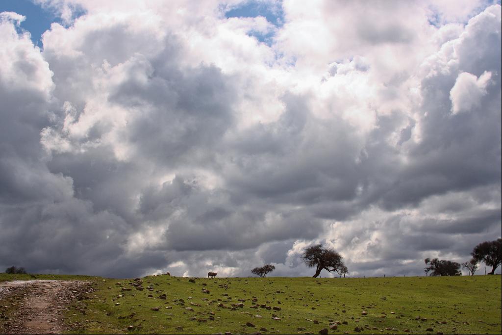 En primavera es común ver estos paisajes donde aún el prado se mantiene verde. © Amelia Ortúzar