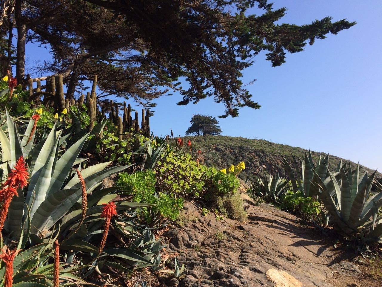 zapallar-vegetacion-naturaleza