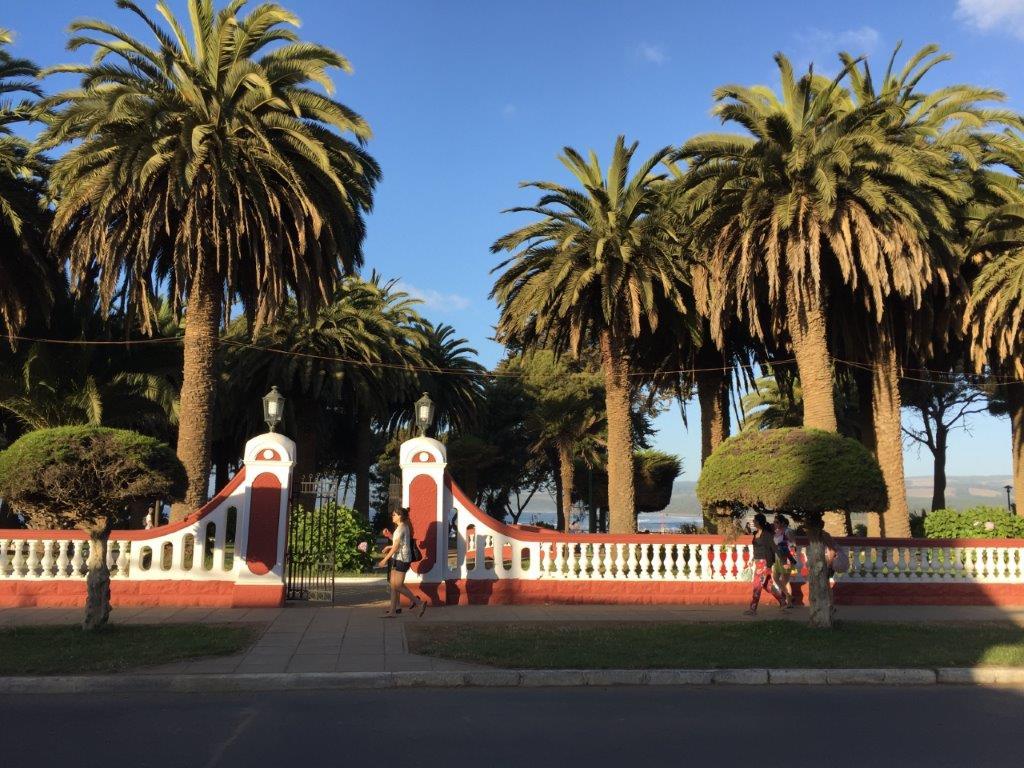pichilemu-plaza-palmeras