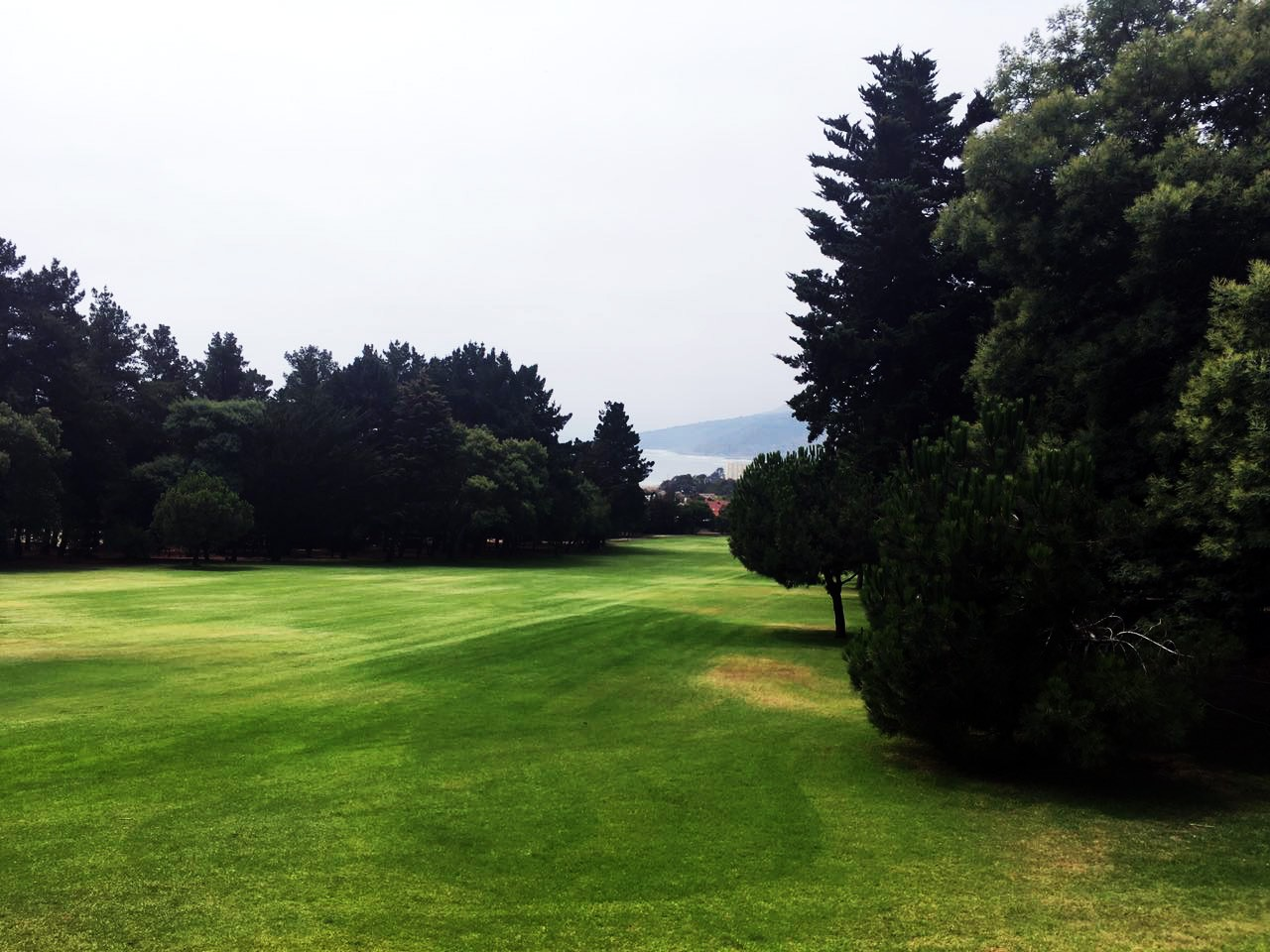 club-de-golf-papudo-arboles